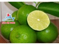 FRESH LIME FROM VIETNAM