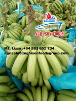 FRESH CAVENDISH BANANA 200 MT/WEEK LOW PRICE