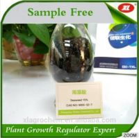 High activity natural Seaweed essence-Super seaweed 98%