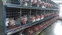New design Rabbit cages