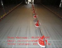 Automatic feeders for poultry farm