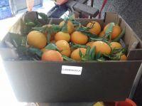 Mandarins Clementine Clemenules