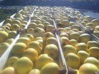 Quality Fresh Fuji Apples for Sale Grade A