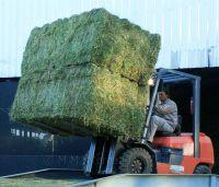Alfalfa Hay , Alfalfa Hay Pellets , Alfalfa Hay Bales from Europe