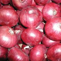 Fresh Red and Yellow Onion