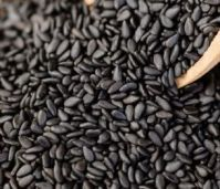 Sesame seeds, chia seeds, jatropha seeds and other seeds for exportation