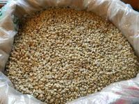 Arabica Coffee bean