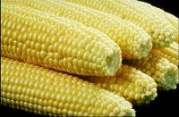 Barley, Buckwheat, Corn ,Dried Grain , Millet ,Oats , Quinao ,Rice, Rye, Sorghum, Wheat, White, White corn, Yellow Corn