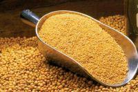 Animal Feed - Soybean Meal In Bulk