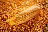 Animal Feed - Yellow Corn In Bulk