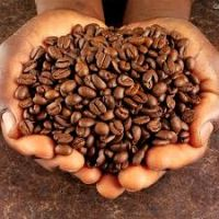 Green Arabica Organic Coffee Beans
