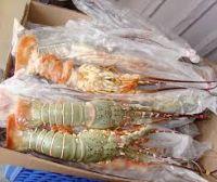 Frozen Octopus, Lobster, Shrimps, Crab, Fish, Sea Food