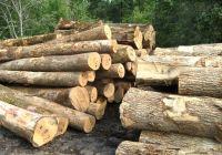 Ash, Pine, Poplar, Oak Logs. Best Quality