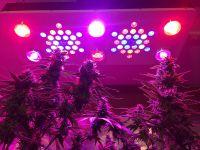 BrightSun BR690 LED Grow Light Glass Optical Lens 12-Band Full Spectrum Seedling/Veg/Flower Dimmable 1000W LED Growlight