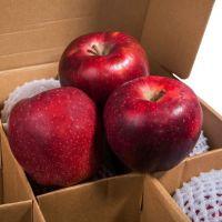 Grade A Fresh Apples / Fuji / Gala / Huaniu /  Golden / Qinguan / Red Delicious Apples