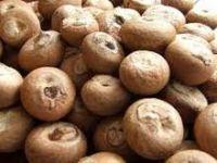 Fresh Green Betel Nut/ Areca nut/Betel Nut Dried Betel Nut - Areca Nut