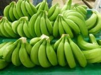 HIGH QUALITY FRESH CAVENDISH BANANA