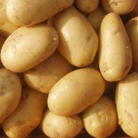 Fresh Potato, Potatoes , Spunta , Washed, Clean Potatoes For Sale