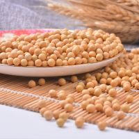 Wholesale Dried Yellow Soybean Seeds