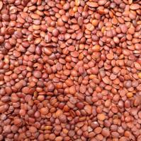 Top grade pure wild Jujube Seeds