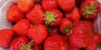 Fresh Straw Berries