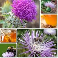 100% Natural Pure Thistle Honey from Bulgaria Ecological Regions High Quality