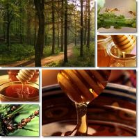 100% Natural Pure Honeydew ( Forest ) Honey from Bulgaria Ecological Regions High Quality