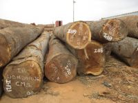 Tali Timber Wood Logs for Sale