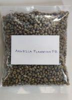 Green Coffee Beans Arabica Plantation PB