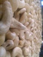 Cashew Nuts, Almond Nuts, Walnuts, Pistachio Nuts