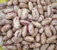Kidney Beans, Pinto Beans, Broad Beans