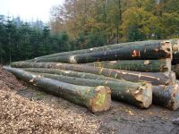 Cheap Birch,Beech,Oak,Pine and Ash Logs