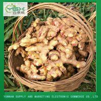 Organic Fresh Yellow Ginger