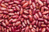 Red Kidney Beans Organic and Wholesale!