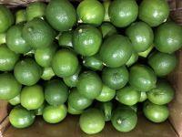 Fresh seedless Lime & Fresh green Lemon