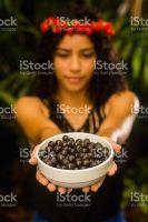 Purple Berry Organic acai