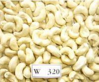 cashew nuts kennels