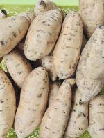Honey Sweet Potato