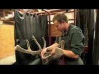 (Grade A) Deer velvet,Deer Antler,Red Deer Antler.
