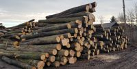 European Beech Logs, Oak Logs, Linden Logs