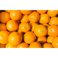 Fresh Orange   Valencia