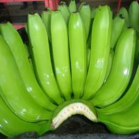 FRESH SWEET CAVENDISH BANANAS FOR SALE