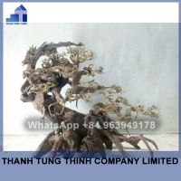 Bonsai Driftwood Supplier For Aquariums