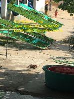 PURE GREEN SEAWEED POWDER// ANNY +84 1626 261 558