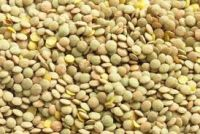 Green Lentil Wholesale
