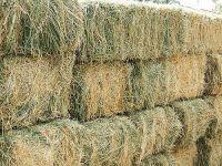 Dehydrated Alfalfa or