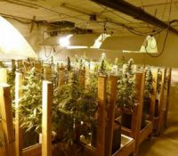 Modern Design Cheapest Hot Sale Plastic Marijuana Greenhouse