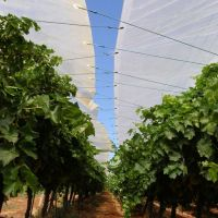 Transparent Reinforced Woven Plastic Cover Tent for Fruit Tree Cherry Tree