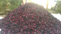 Dried Hibiscus Flower | Hibiscus Fower