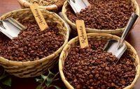 Coffee robusta and Arabica